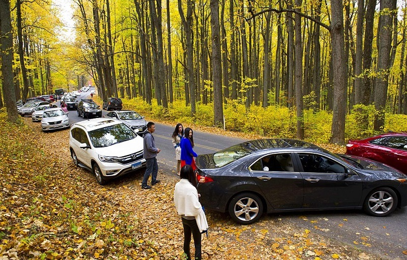 Traffic comes to a halt October 24, 2015 as hundreds of visitors pull off the road to get their Fall color photos along Skyline drive in Shenandoah National Park in Virginia. Thousands of visitors descended on the park Saturday creating miles of traffic backups at all of the entrances making traffic control a nightmare for police.