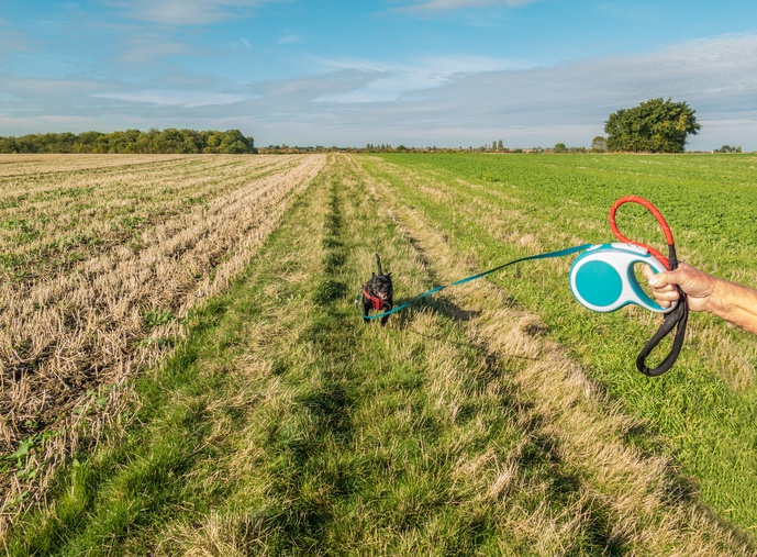 dog on retractable leash
