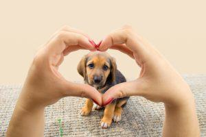 How Your Dog Can Help You Manage Your Diabetes