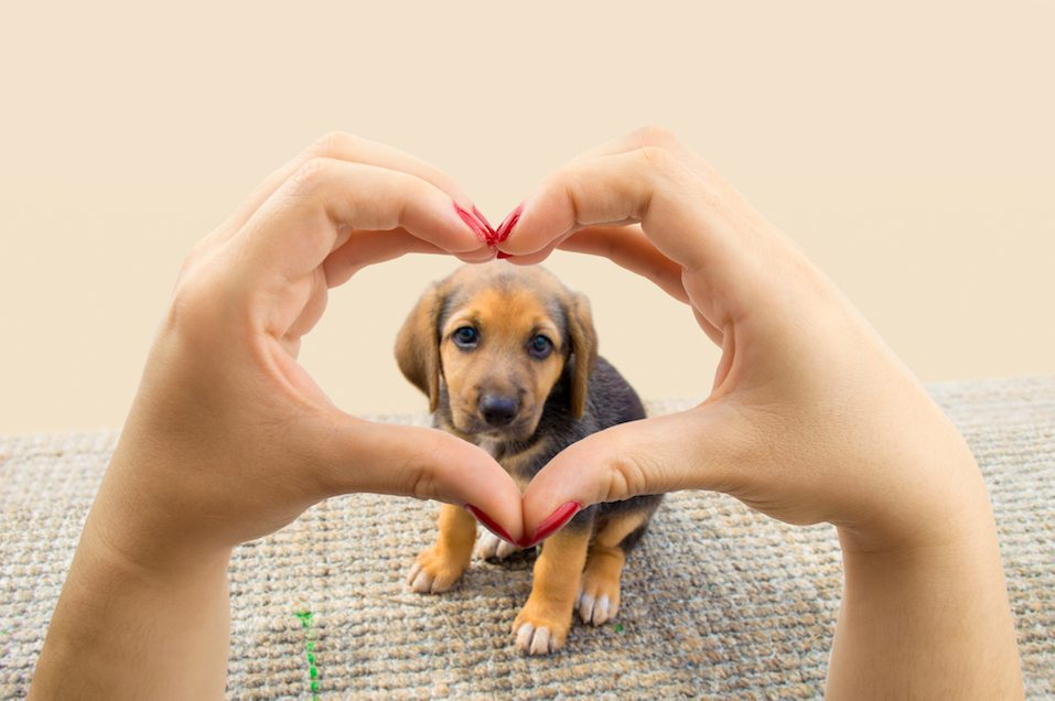 Puppy inside heart hands