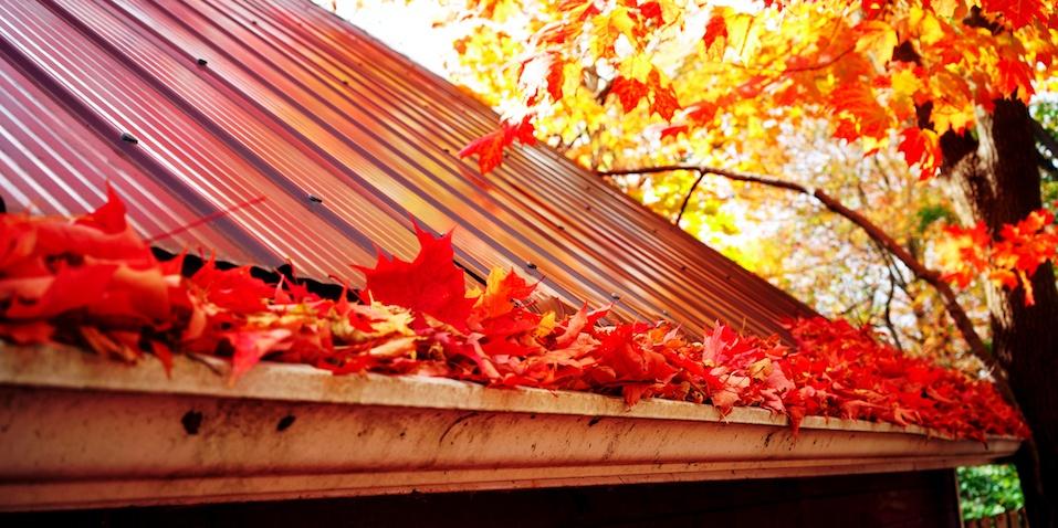 Marple leaves in gutter, fall time