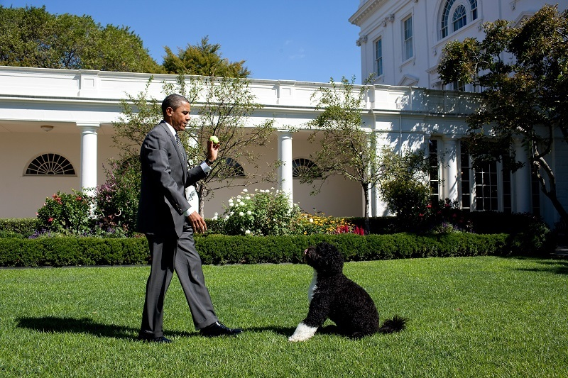 President Barack Obama throws a ball for Bo, the family dog, in the Rose Garden