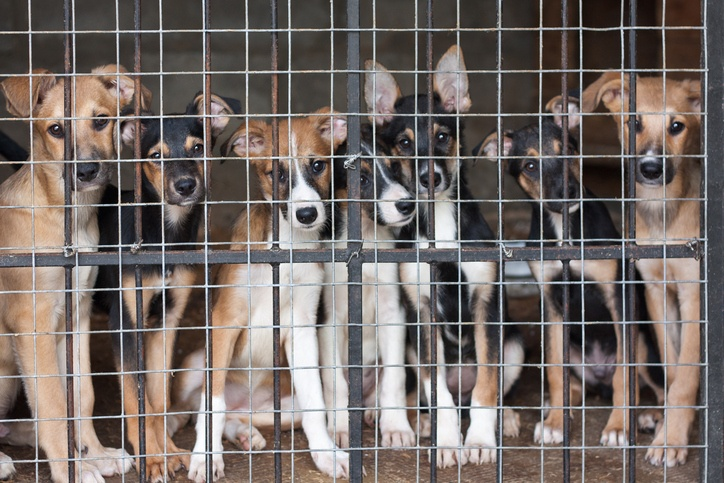 Many cute puppies locked in the cage
