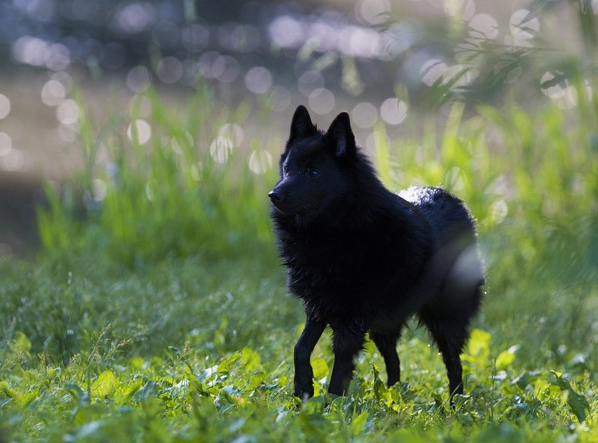 Top 15 Dog Breeds No Insurance Company Wants to Cover