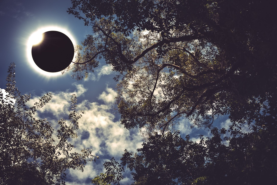 Total solar eclipse glowing on blue sky above silhouette of trees