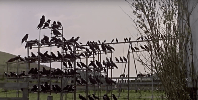 A hoard of black birds from The Birds