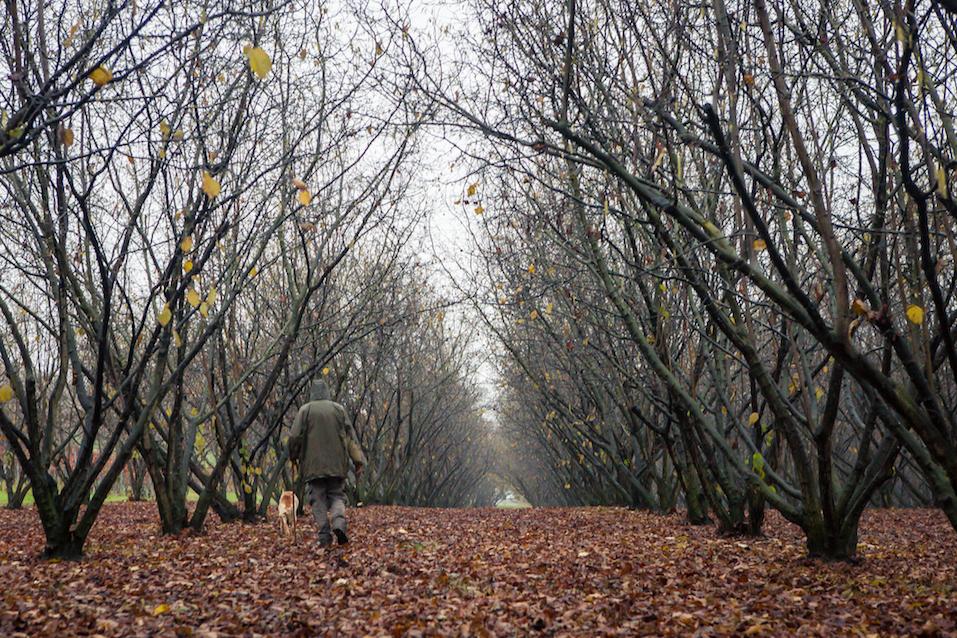 Truffle hunting, Piedmont, Italy