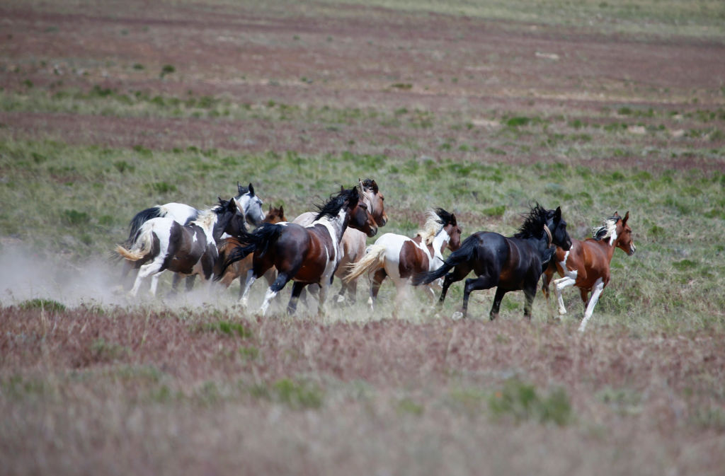 Wild horses in the Outer Banks, North Carolina