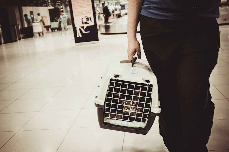 cat closed inside pet carrier in airport