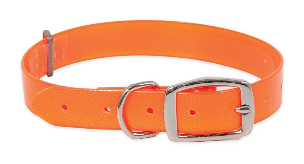 orange dog collar