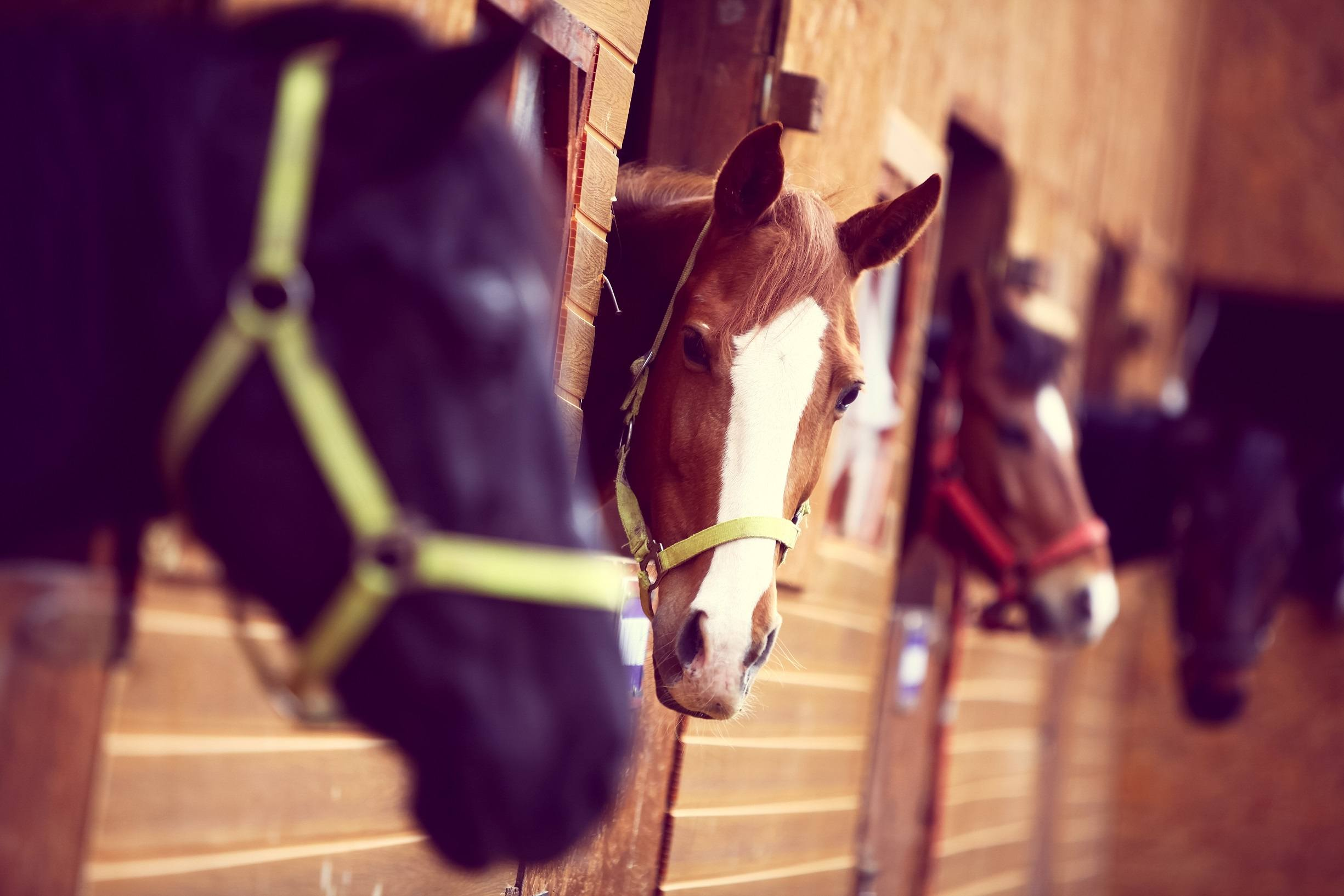 Horses in a stable
