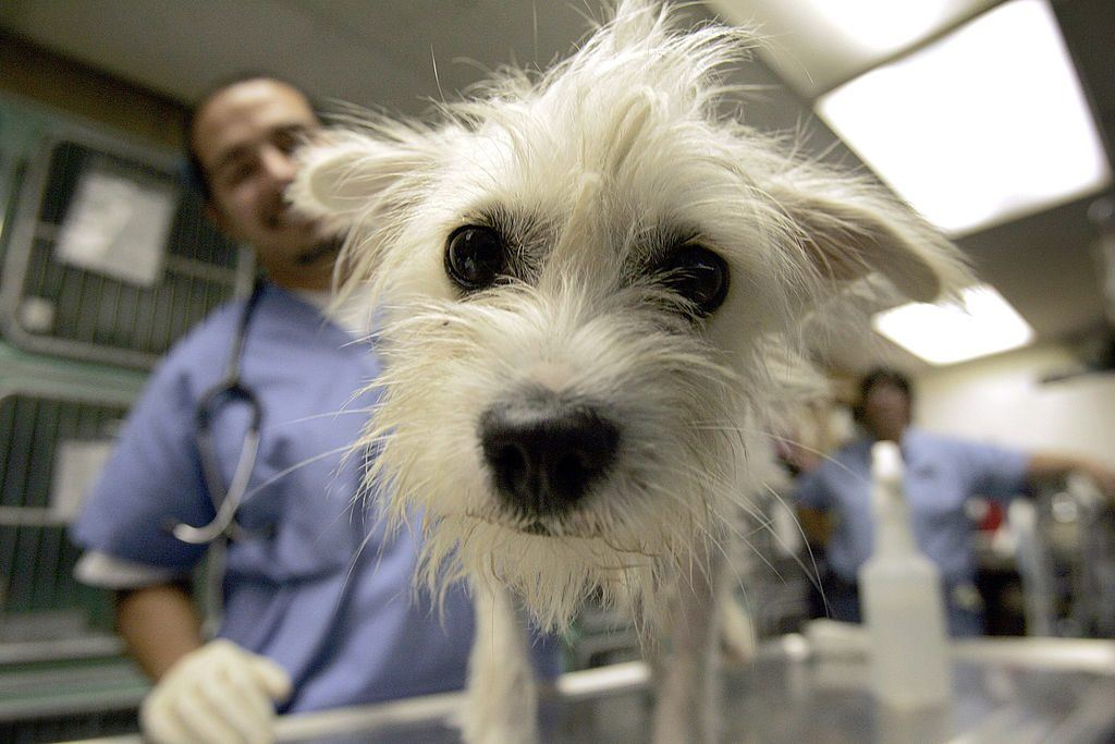 Dog at the vet after hurricane Katrina