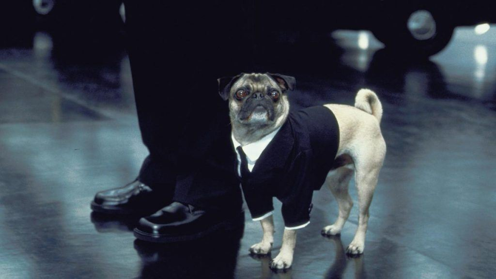 Pug dog from the Men in Black movie