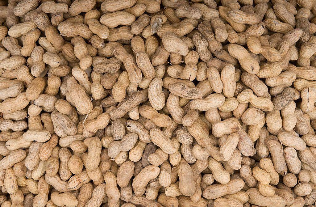 Peanut allergy pill helps cure peanut allergy