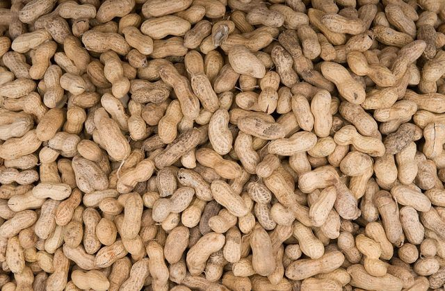 Peanuts in a pile.