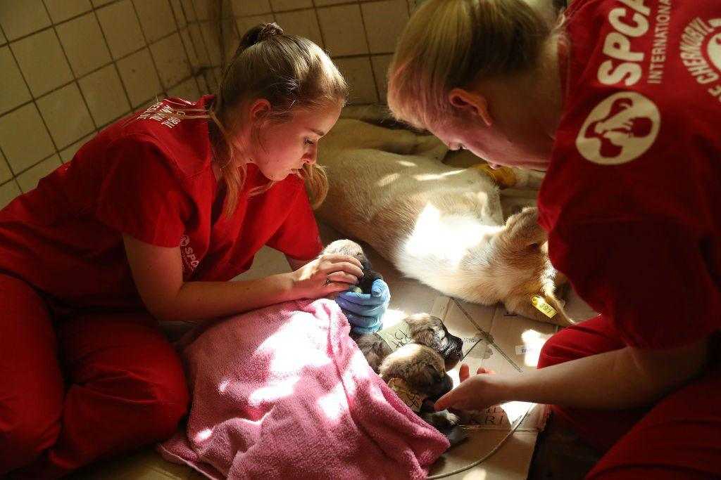 SPCA volunteers helping sick animal