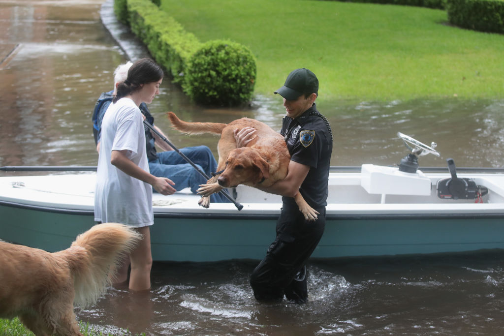 Volunteer helping dogs into boat in Texas during a flood.
