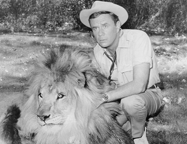 Marshall taking care of a lion.