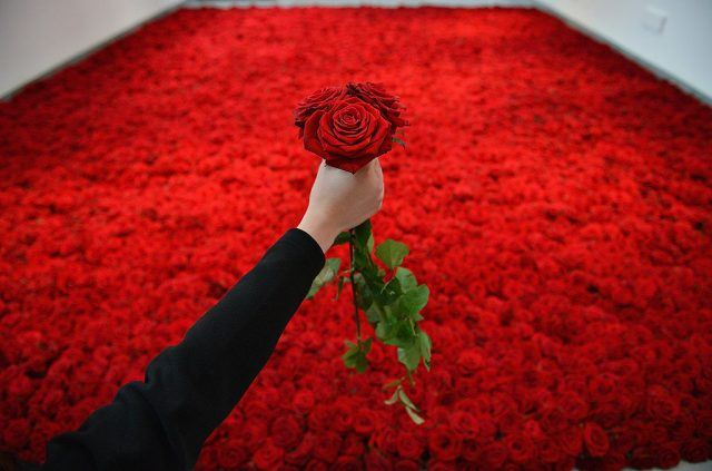 Rachel Horsman holds a rose - for the photographer - above 10,000 red roses laid upon the gallery floor