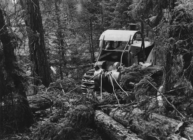 July 1942: A caterpillar tractor dragging felled trees out of the Malheur National Forest, Grant County, Oregon.