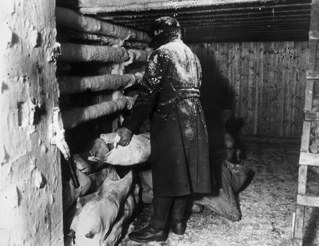man storing meat in a freezer