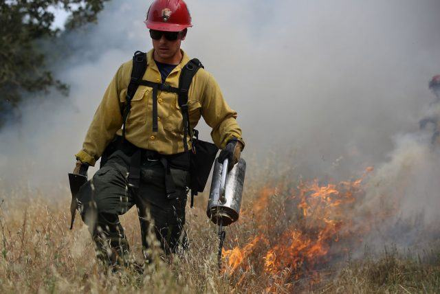 A firefighter uses a drip torch to ignite dry grass during a controlled burn at Bouverie Preserve.