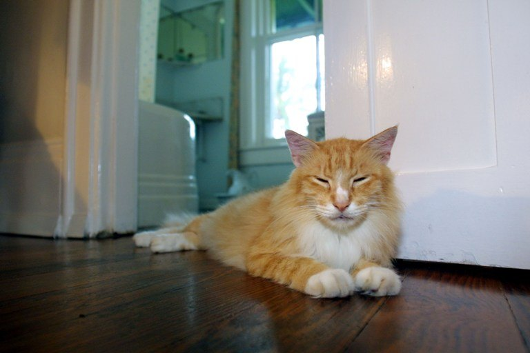 A Cat Lies in the Hemingway Home