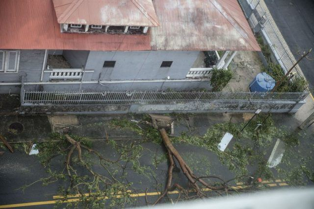 Trees and rubble seen in Puerto Rico on a street block.