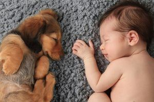 This Is the 1 Thing You Need to Do to Introduce Your Dog to a New Baby
