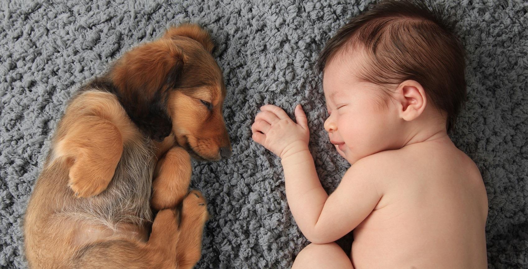 Newborn baby with dog