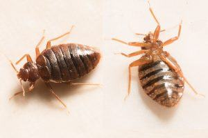 The 1 Terrifying Way You're Increasing Your Odds of Getting Bedbugs at a Hotel