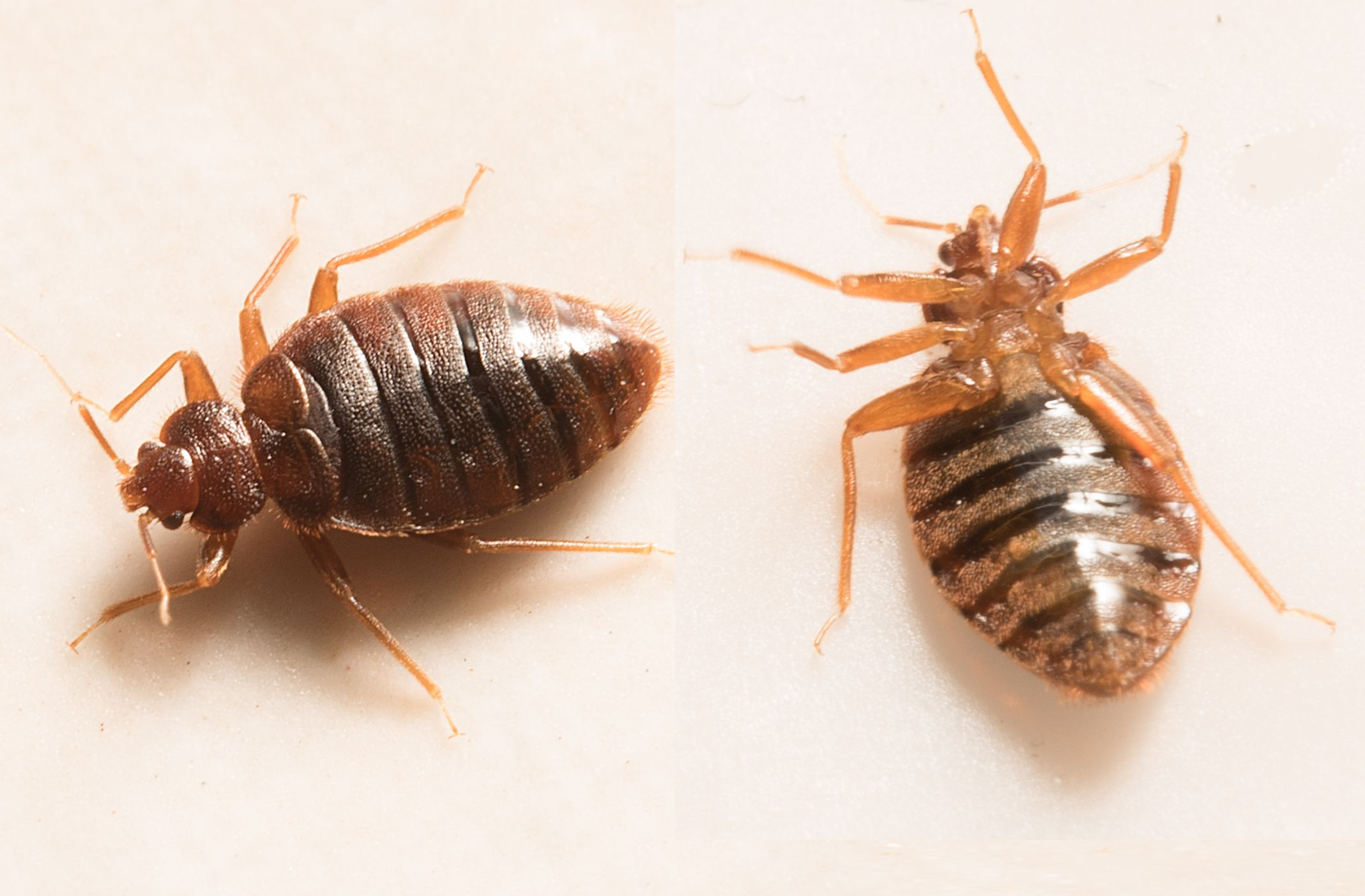 Scared of Bedbugs? You Need to Avoid These 15 Cities