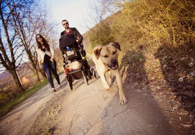 Dog walking with baby stroller