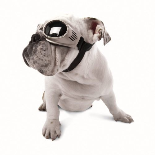 Doggles, dog goggles