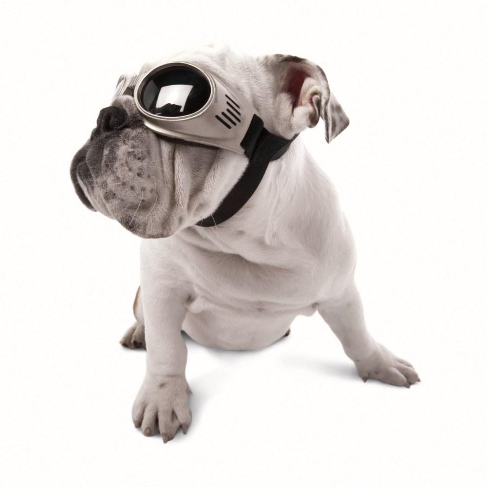 Doggles dog goggles