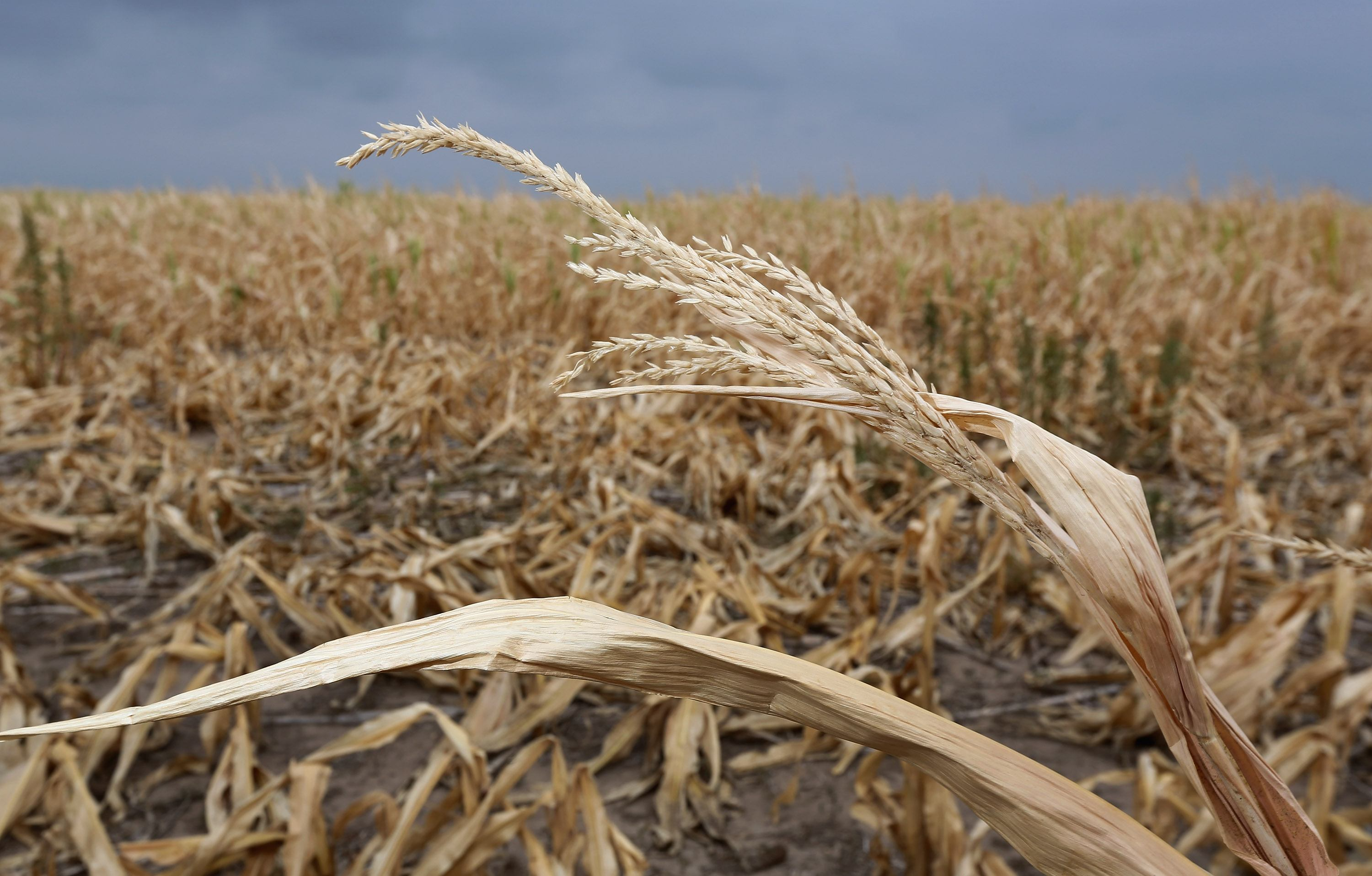 Kansas faces severe drought