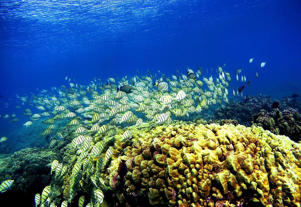 Coral reef in Hawaii