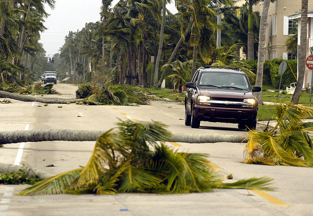 Palm trees knocked over after Hurricane Wilma