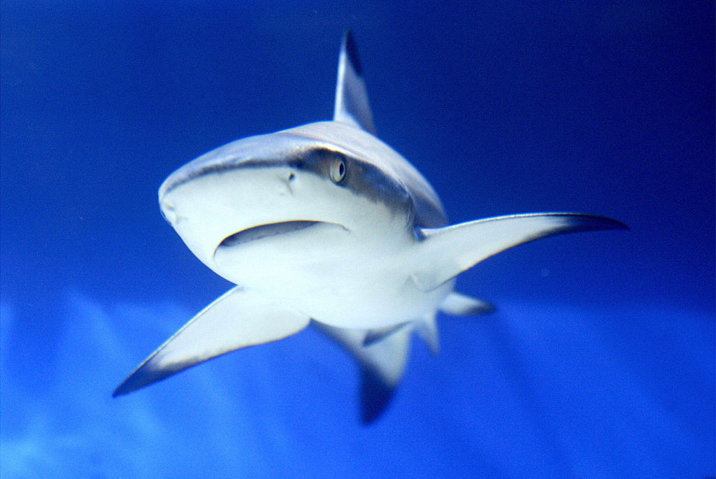 a shark in the water