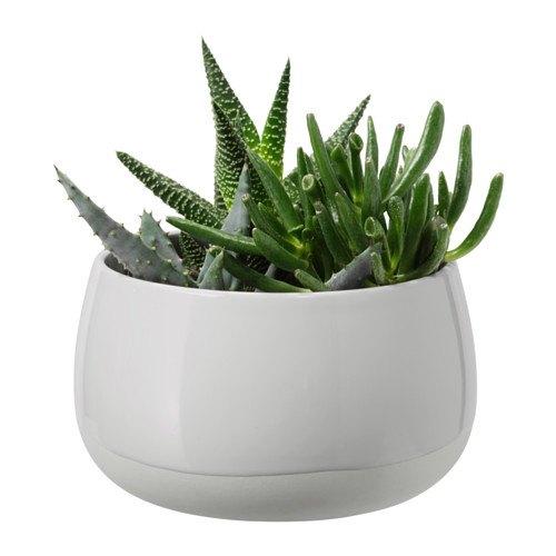 Ikea succulent