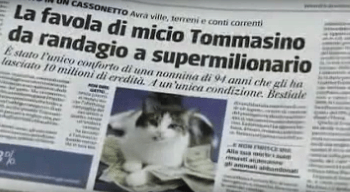 Tommaso or Tommasino the millionaire cat