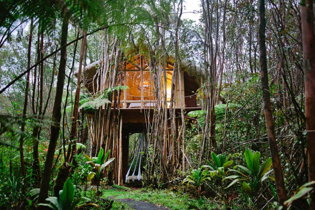 Hawaiian forest tree house
