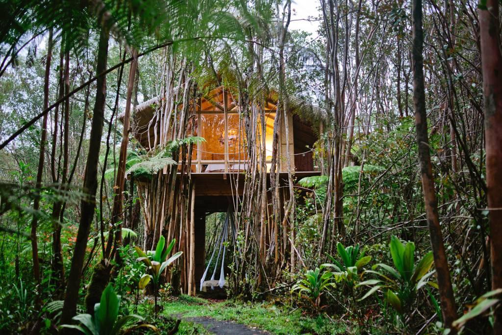 Hawaiian forest tree house