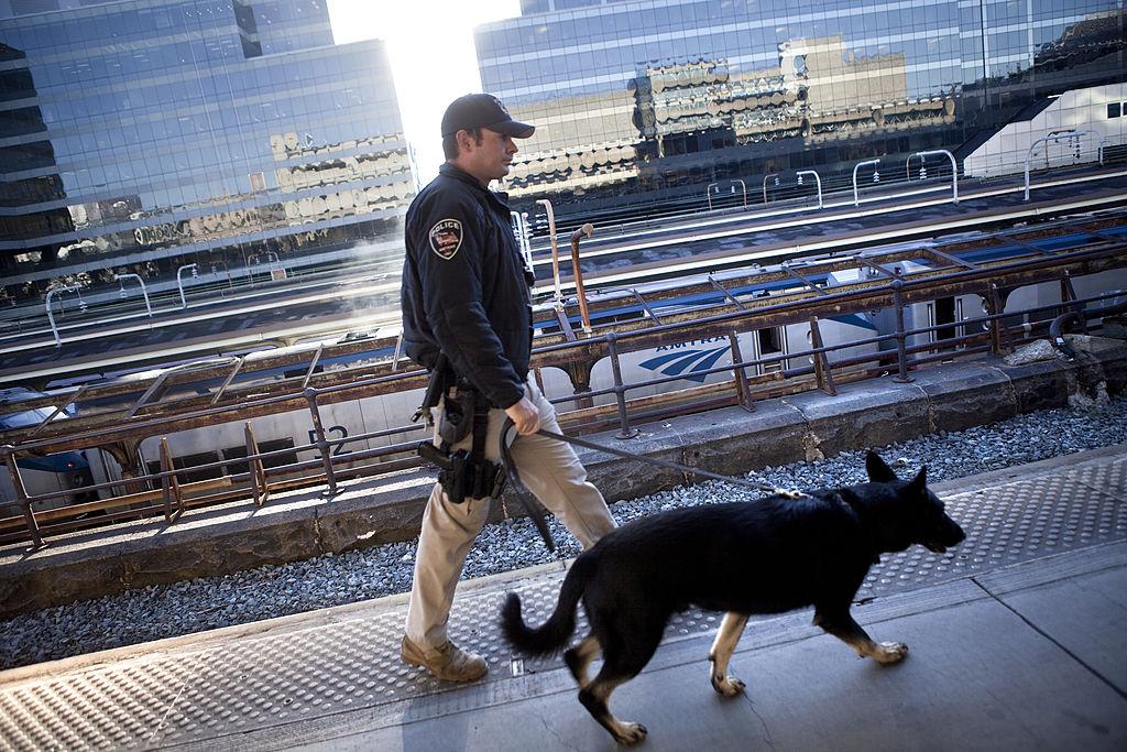 TSA dog