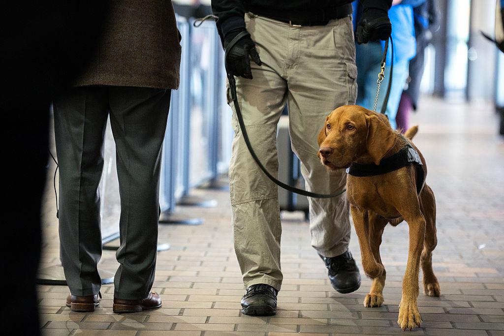 Pointer dog TSA