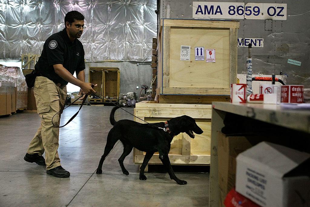TSA bomb sniffing dog