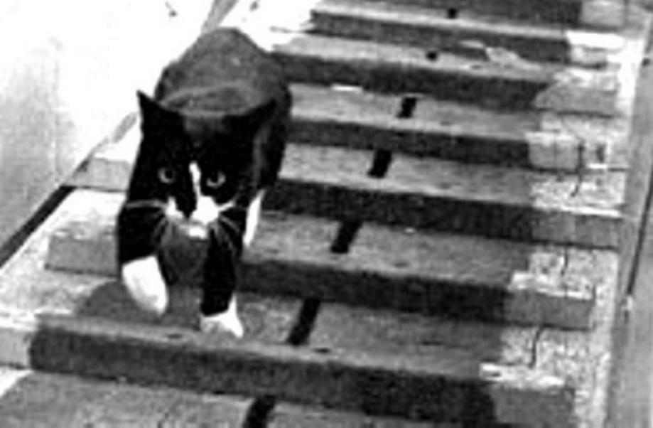 Unsinkable sam the cat