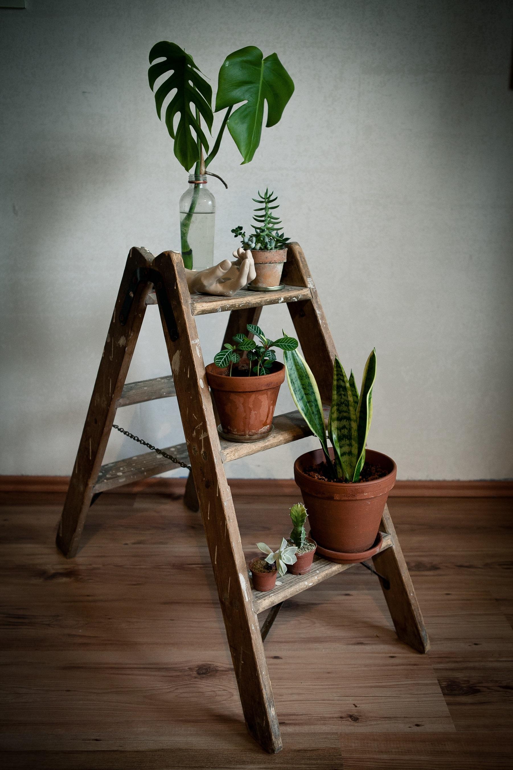 Vintage ladder with plants