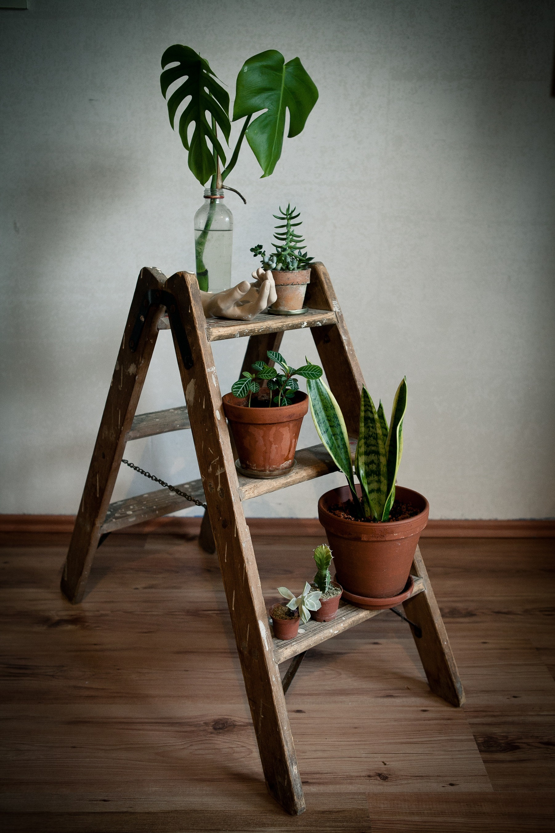 Vintage ladder with plants
