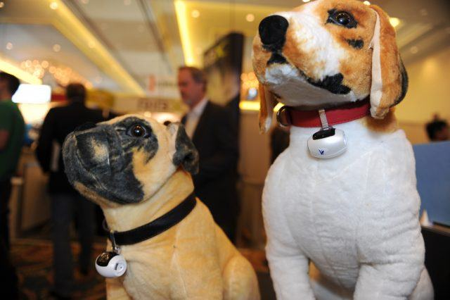 Stuffed dogs wear the PawsCam camera for pets.